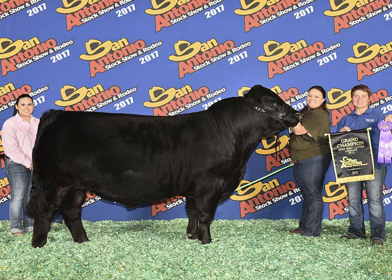 photo of a bull